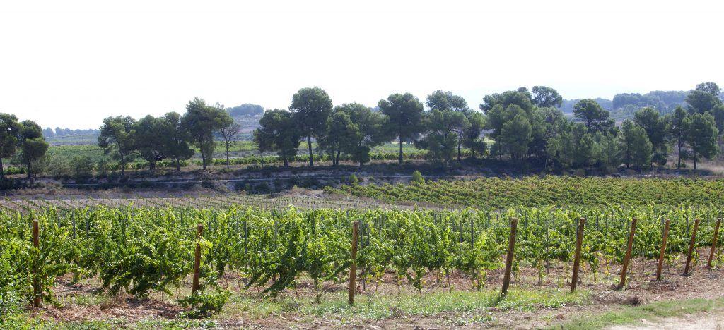 El vino Icono patrocina el festival VLC NEGRA.